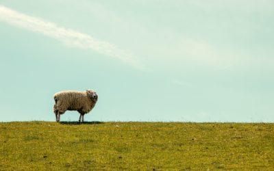 """""""En salida… con olor a oveja, el buen pastor"""""""